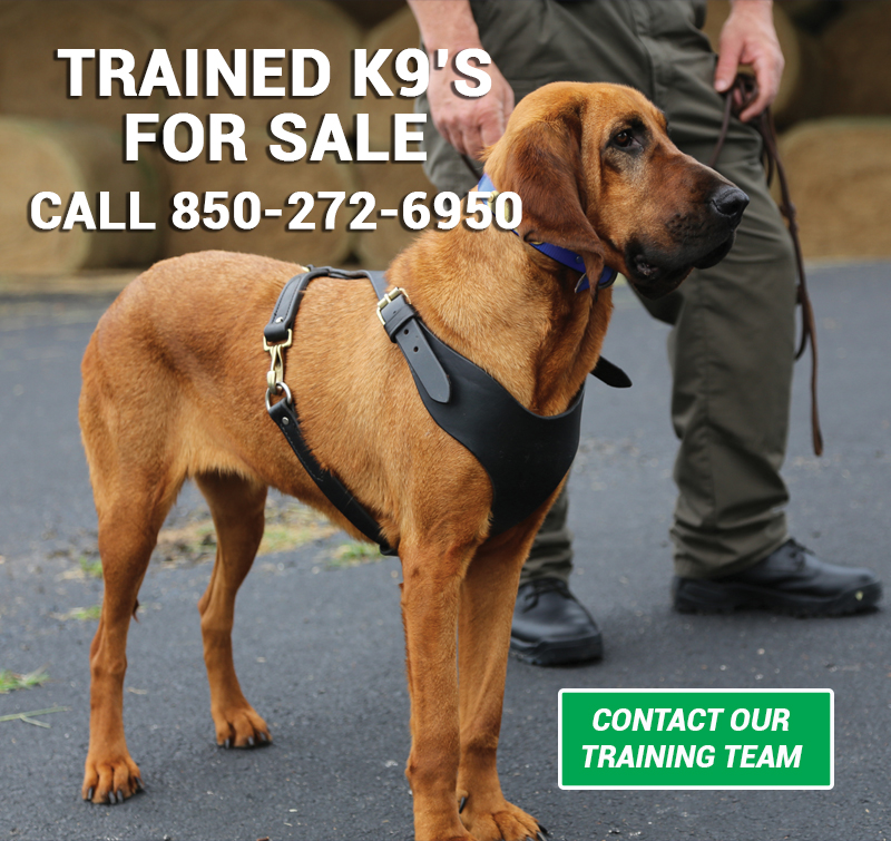 Trained K9's For Sale