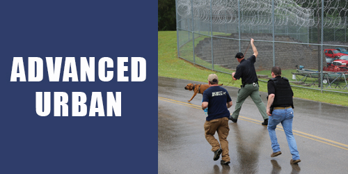 Advanced Urban K9 Training