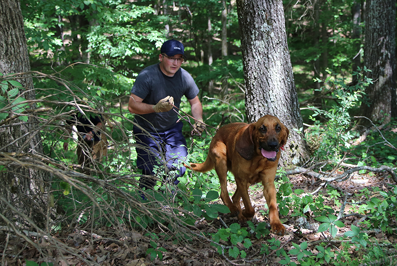 Human Scent Discriminate K9 Trailing
