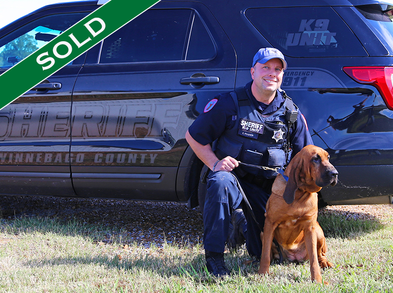 WCSO - Nancy Drew - Trained K9's for sale -SOLD