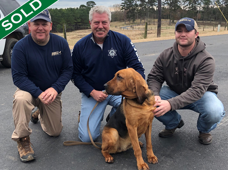 WCSO - Roxy - Trained K9's for sale -SOLD
