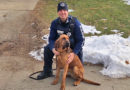 Winnebago County Bloodhound