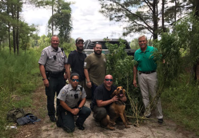 LCSO bloodhound team uses human scent to find illegal pot field